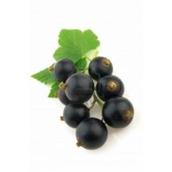 Cassis (Grosella negra)