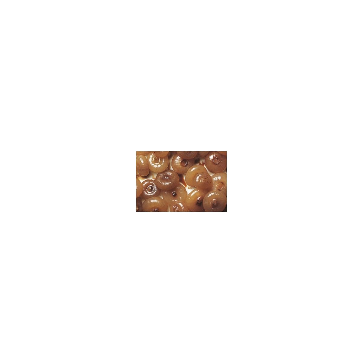 Cebollitas con vinagre de Módena