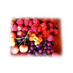 Cocktail Frutas del Bosque i Frutas Rojas